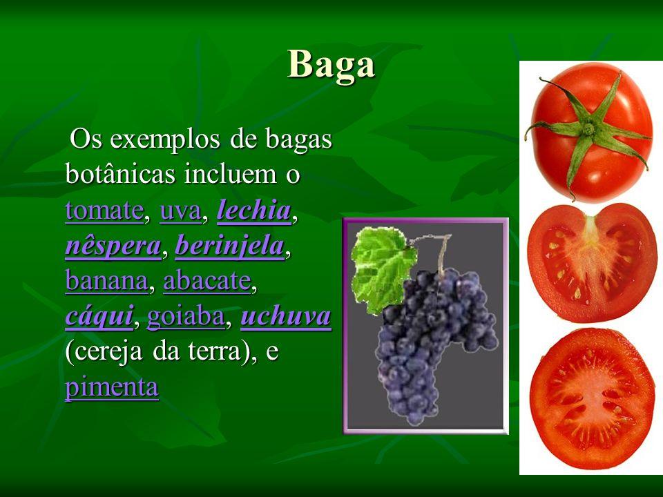 Baga Os exemplos de bagas botânicas incluem o tomate, uva, lechia, nêspera, berinjela, banana, abacate, cáqui, goiaba, uchuva (cereja da terra), e pim