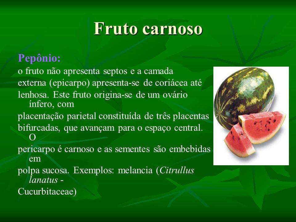 Fruto carnoso Pepônio: o fruto não apresenta septos e a camada externa (epicarpo) apresenta-se de coriácea até lenhosa. Este fruto origina-se de um ov
