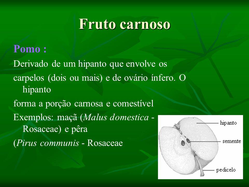 Fruto carnoso Pomo : Derivado de um hipanto que envolve os carpelos (dois ou mais) e de ovário ínfero. O hipanto forma a porção carnosa e comestível E