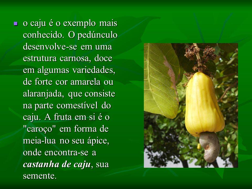 o caju é o exemplo mais conhecido. O pedúnculo desenvolve-se em uma estrutura carnosa, doce em algumas variedades, de forte cor amarela ou alaranjada,