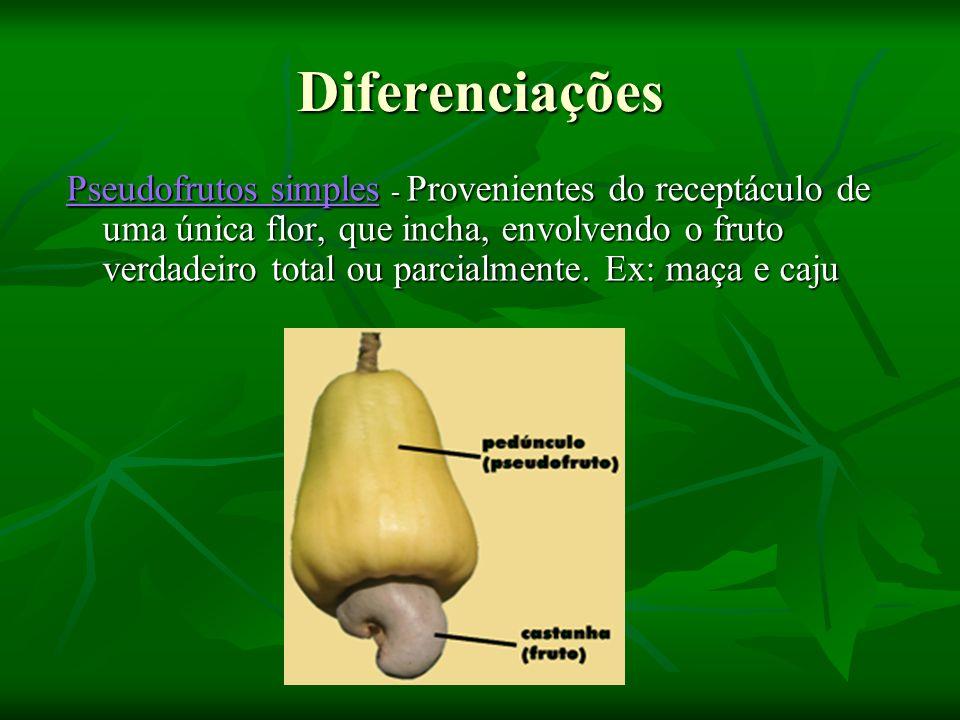 Diferenciações Pseudofrutos simples Pseudofrutos simples - Provenientes do receptáculo de uma única flor, que incha, envolvendo o fruto verdadeiro tot