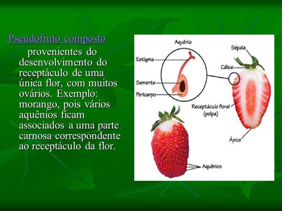 Pseudofruto composto Pseudofruto composto provenientes do desenvolvimento do receptáculo de uma única flor, com muitos ovários. Exemplo: morango, pois