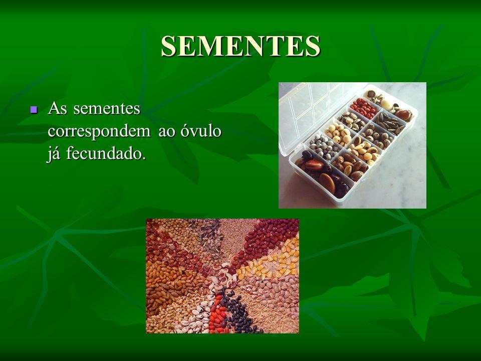 SEMENTES As sementes correspondem ao óvulo já fecundado. As sementes correspondem ao óvulo já fecundado.