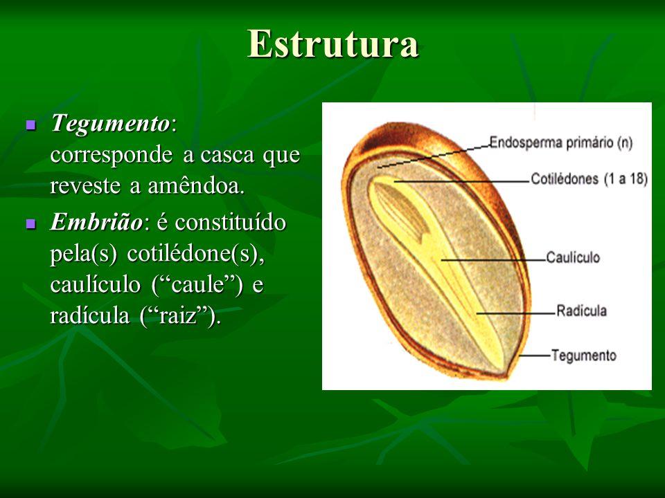 Estrutura Tegumento: corresponde a casca que reveste a amêndoa. Tegumento: corresponde a casca que reveste a amêndoa. Embrião: é constituído pela(s) c