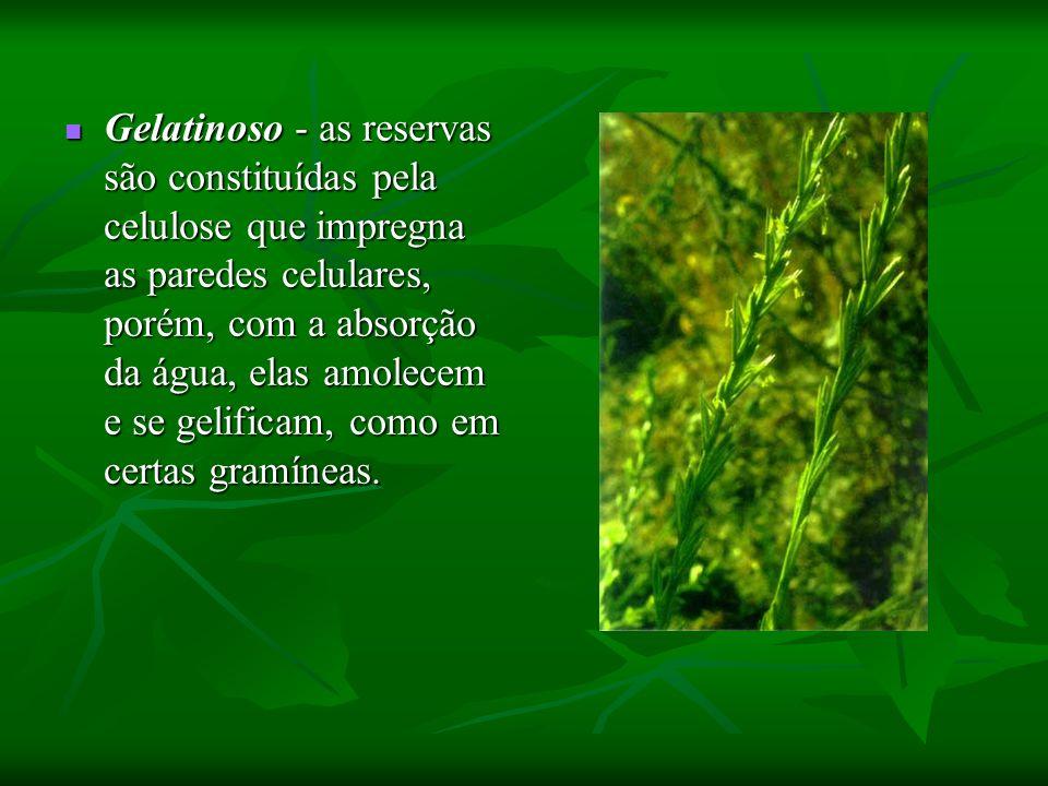 Gelatinoso - as reservas são constituídas pela celulose que impregna as paredes celulares, porém, com a absorção da água, elas amolecem e se gelificam