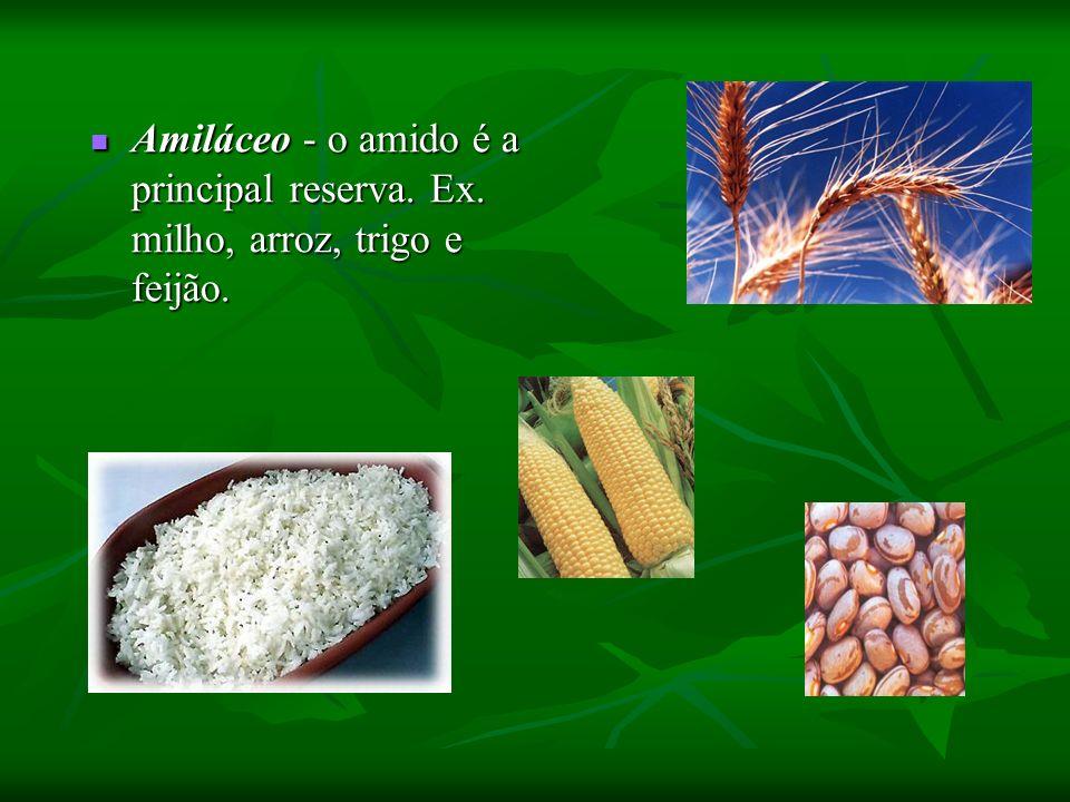Amiláceo - o amido é a principal reserva. Ex. milho, arroz, trigo e feijão. Amiláceo - o amido é a principal reserva. Ex. milho, arroz, trigo e feijão