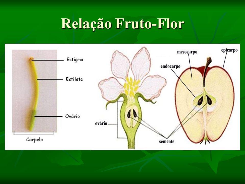 Pseudofruto Muitas vezes aquilo que vulgarmente se chama de fruta não corresponde ao conceito botânico de fruto, que é o produto do ovário da flor após a fecundação.