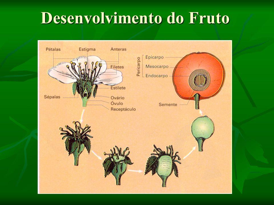 Fruto,botanicamente falando, portanto, é: O conjunto formado pelo pericarpo, originado pelas paredes do ovário e a semente, formada a partir do óvulo fecundado.