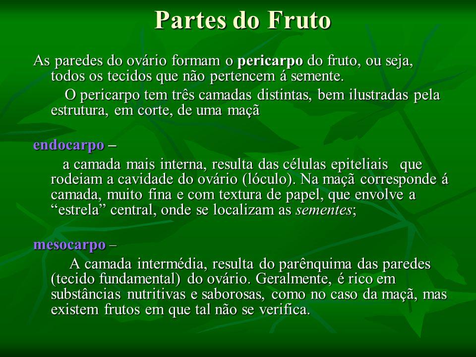 Partes do Fruto As paredes do ovário formam o pericarpo do fruto, ou seja, todos os tecidos que não pertencem á semente. As paredes do ovário formam o