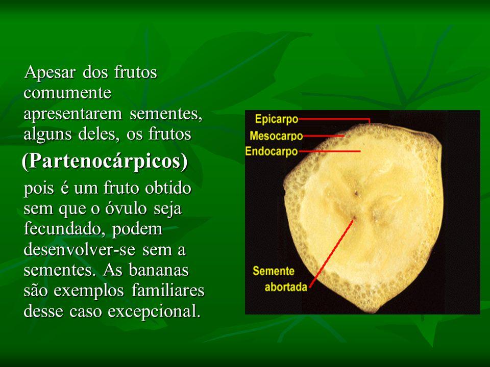 Apesar dos frutos comumente apresentarem sementes, alguns deles, os frutos Apesar dos frutos comumente apresentarem sementes, alguns deles, os frutos