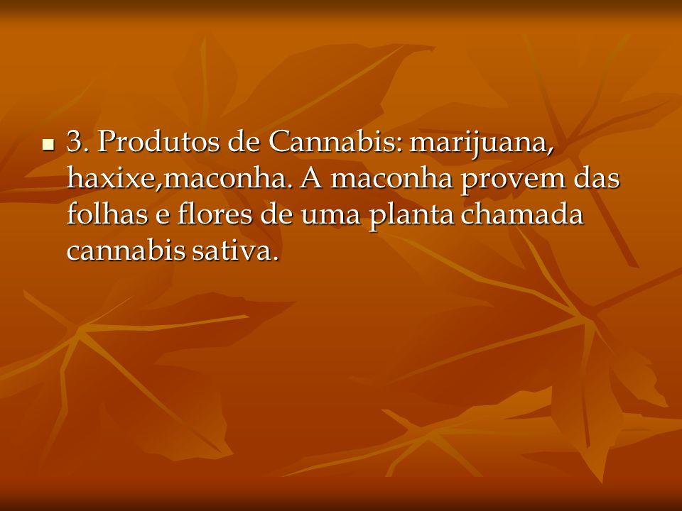 3. Produtos de Cannabis: marijuana, haxixe,maconha. A maconha provem das folhas e flores de uma planta chamada cannabis sativa. 3. Produtos de Cannabi