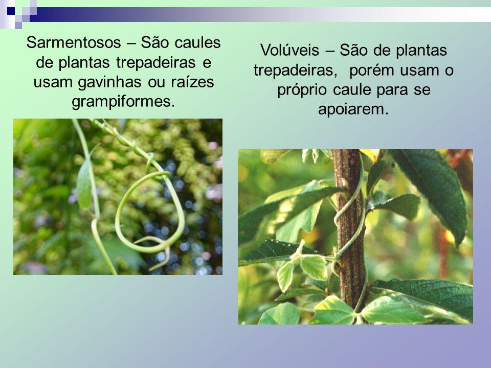 Sarmentosos – São caules de plantas trepadeiras e usam gavinhas ou raízes grampiformes. Volúveis – São de plantas trepadeiras, porém usam o próprio ca