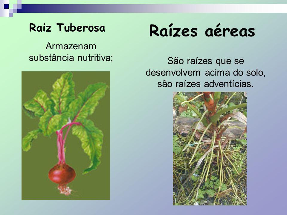 Suporte ou Escora São tubulares, típicas em vegetais de grande porte, aumenta a fixação e auxilia na respiração da planta.