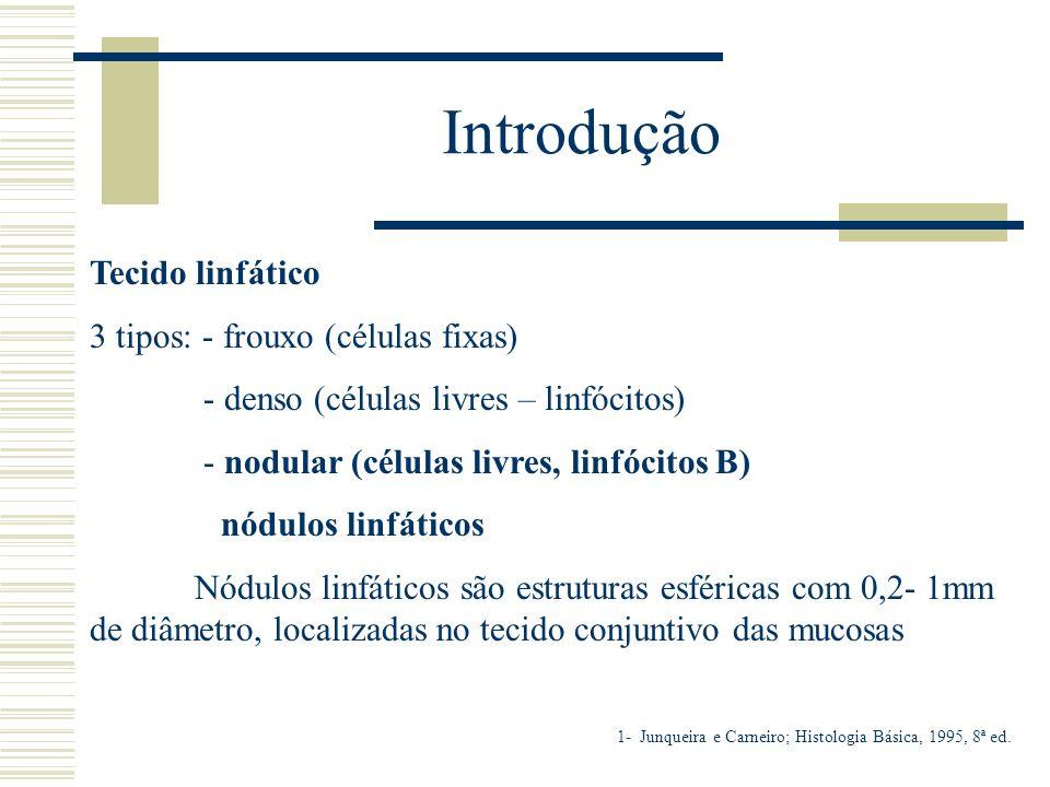 Introdução Tecido linfático 3 tipos: - frouxo (células fixas) - denso (células livres – linfócitos) - nodular (células livres, linfócitos B) nódulos l