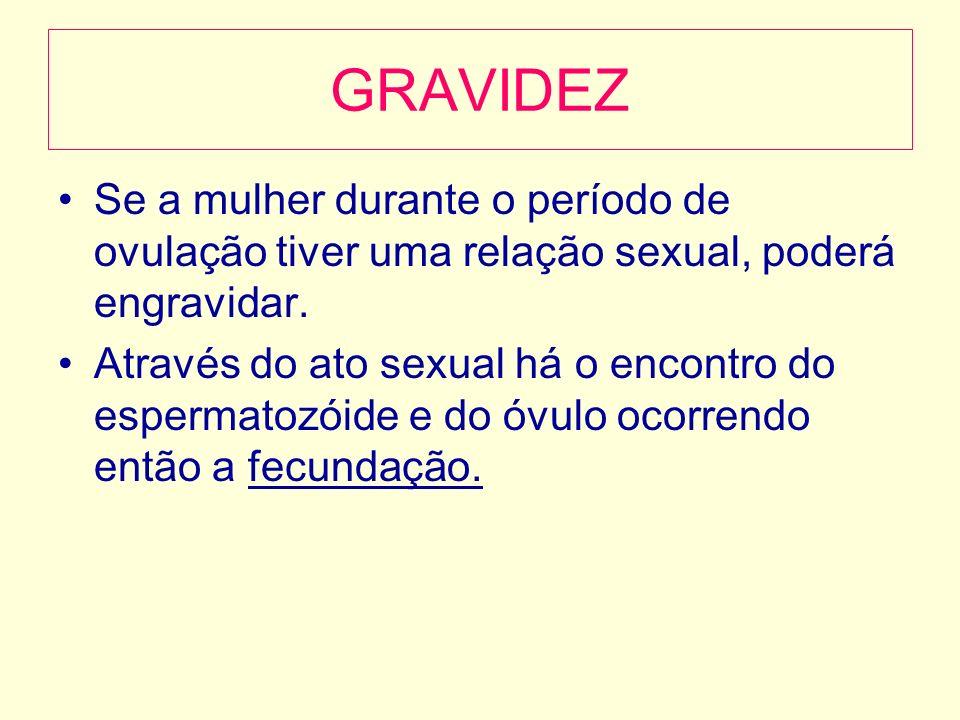 GRAVIDEZ Se a mulher durante o período de ovulação tiver uma relação sexual, poderá engravidar. Através do ato sexual há o encontro do espermatozóide