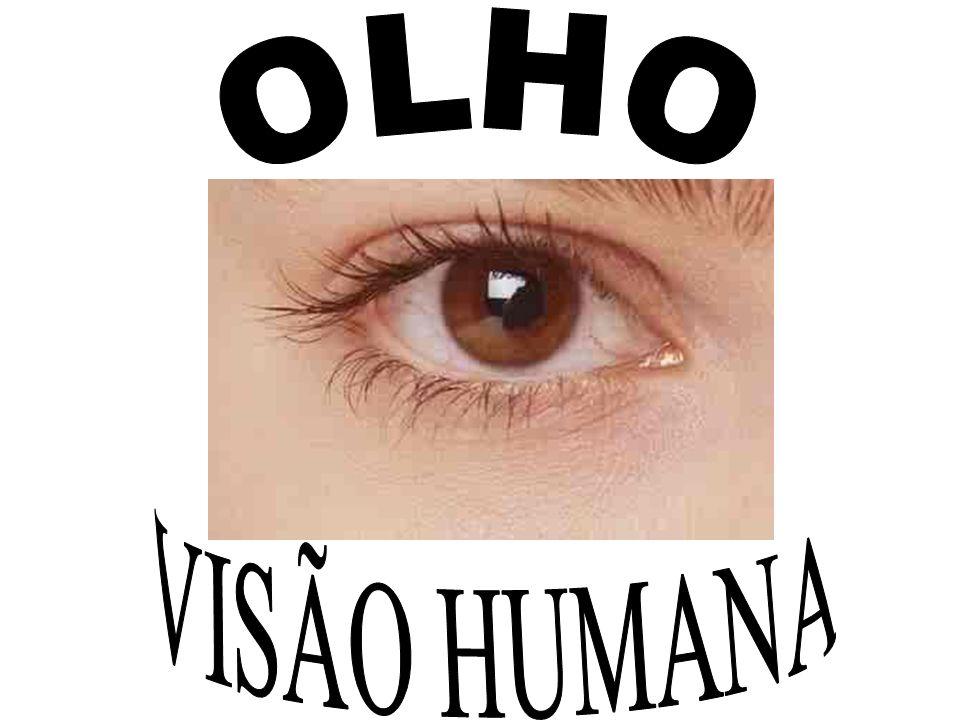 INTRODUÇÃO Os principais componentes visuais do sistema visual são: os olhos, o mecanismo encefálico para interpretação dos sinais visuais e o mecanismo encefálico para o controle das funções motoras dos olhos O olho é um órgão receptor altamente especiali- zado do sistema nervoso.