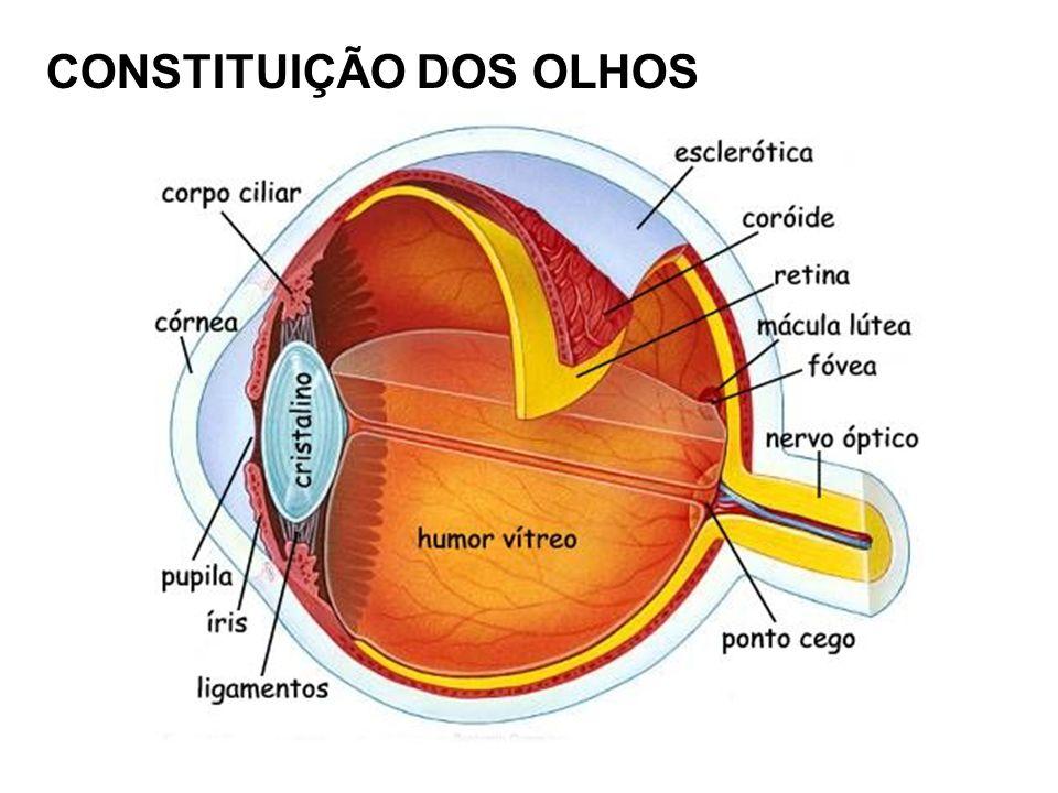 Esclerótica Formado por tecido conjuntivo denso, pouco vascularizado, opaca e branco.