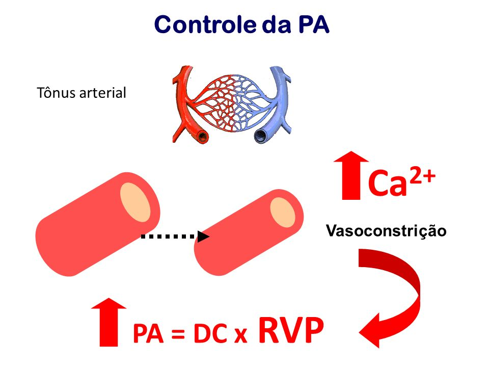 PA = DC x RVP Controle da PA Tônus arterial Ca 2+ Vasoconstrição
