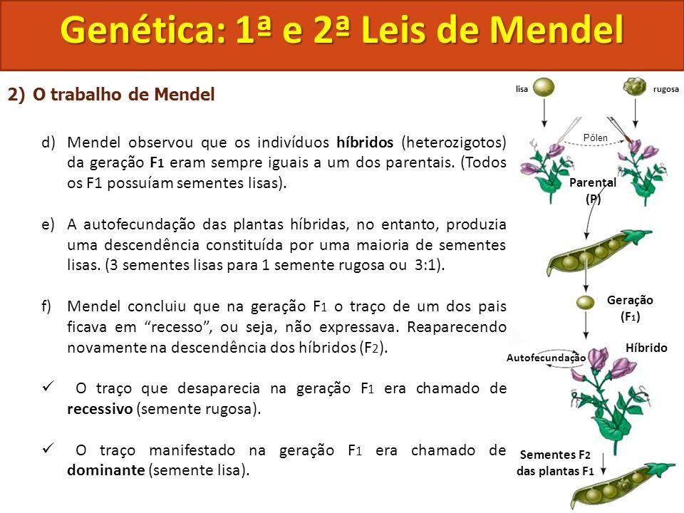 2)O trabalho de Mendel d)Mendel observou que os indivíduos híbridos (heterozigotos) da geração F 1 eram sempre iguais a um dos parentais. (Todos os F1