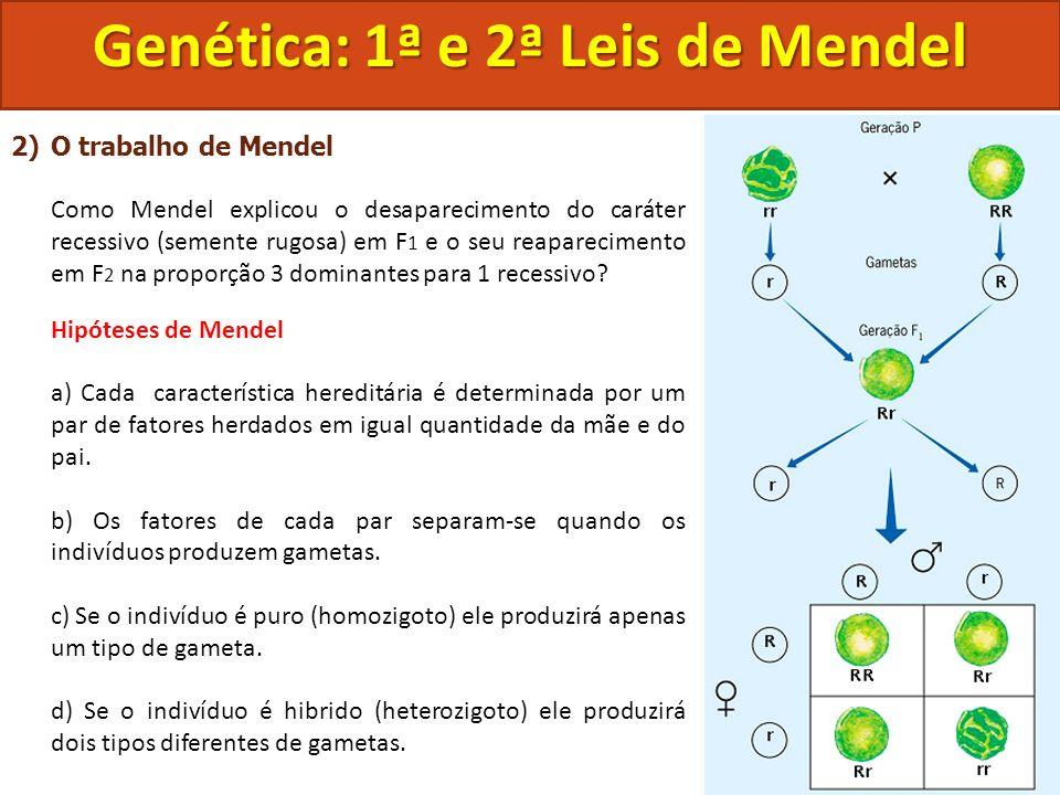 2)O trabalho de Mendel Como Mendel explicou o desaparecimento do caráter recessivo (semente rugosa) em F 1 e o seu reaparecimento em F 2 na proporção