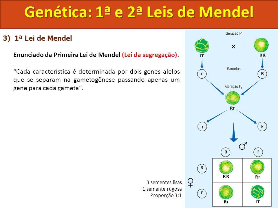 3) 1ª Lei de Mendel Enunciado da Primeira Lei de Mendel (Lei da segregação). Cada característica é determinada por dois genes alelos que se separam na