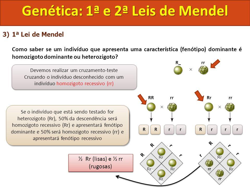 3)1ª Lei de Mendel Como saber se um indivíduo que apresenta uma característica (fenótipo) dominante é homozigoto dominante ou heterozigoto? Genética: