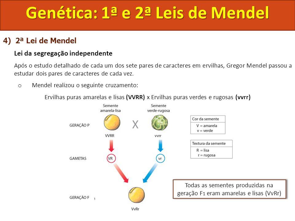 4) 2ª Lei de Mendel Lei da segregação independente Após o estudo detalhado de cada um dos sete pares de caracteres em ervilhas, Gregor Mendel passou a