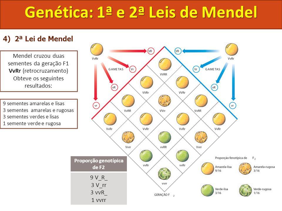 4) 2ª Lei de Mendel Genética: 1ª e 2ª Leis de Mendel Mendel cruzou duas sementes da geração F1 VvRr (retrocruzamento) Obteve os seguintes resultados: