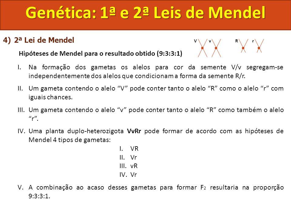 4)2ª Lei de Mendel Hipóteses de Mendel para o resultado obtido (9:3:3:1) I.Na formação dos gametas os alelos para cor da semente V/v segregam-se indep