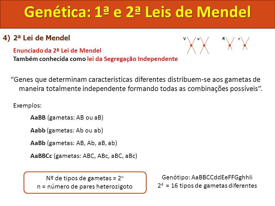 4)2ª Lei de Mendel Enunciado da 2ª Lei de Mendel Também conhecida como lei da Segregação Independente Genes que determinam características diferentes