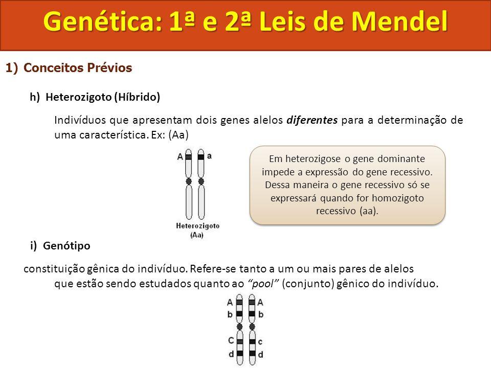 1)Conceitos Prévios h) Heterozigoto (Híbrido) Indivíduos que apresentam dois genes alelos diferentes para a determinação de uma característica. Ex: (A