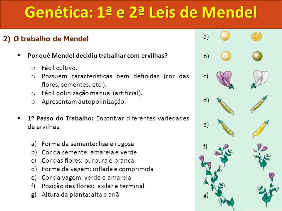 2)O trabalho de Mendel Por quê Mendel decidiu trabalhar com ervilhas? o Fácil cultivo. o Possuem características bem definidas (cor das flores, sement