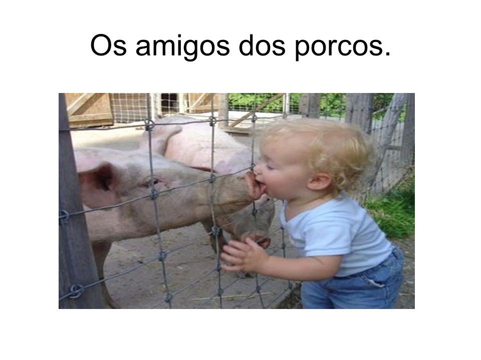 Os amigos dos porcos.