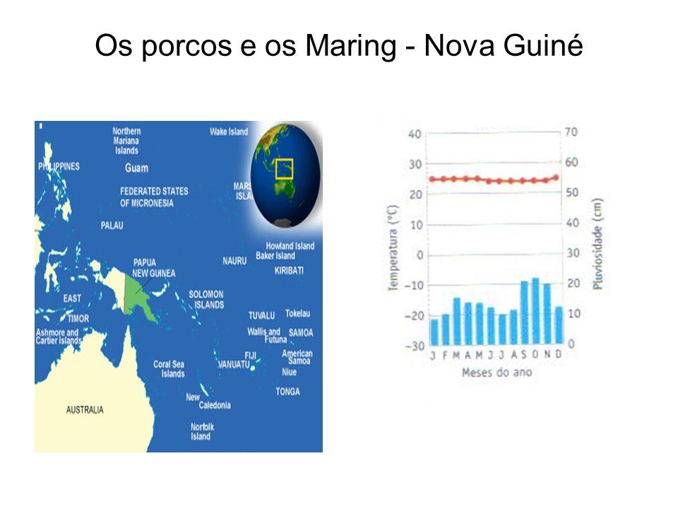 Os porcos e os Maring - Nova Guiné