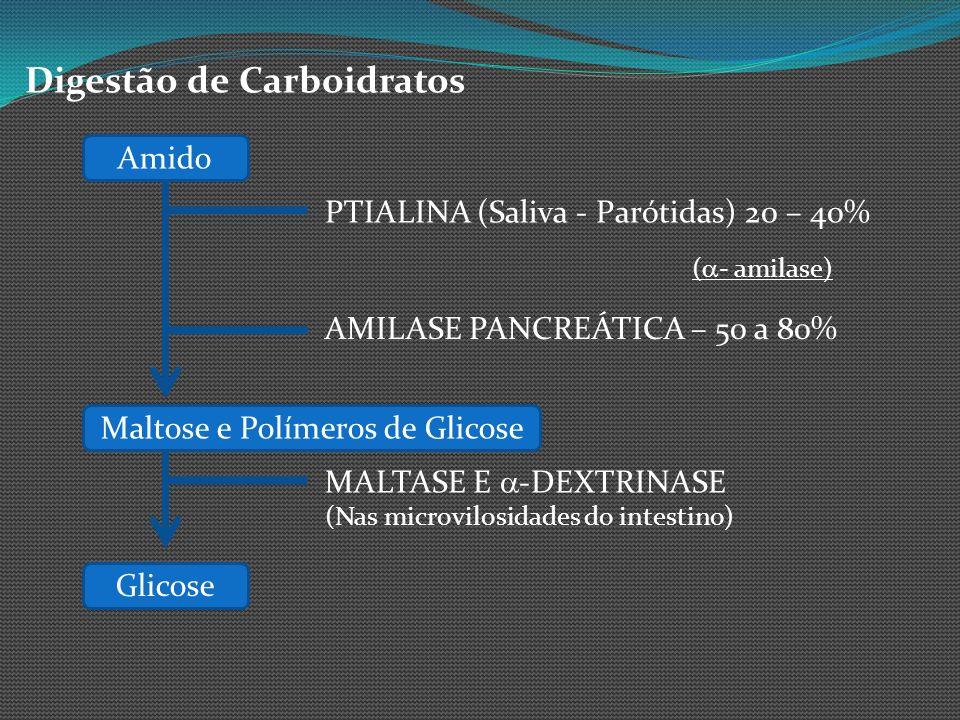 Digestão de Carboidratos Amido PTIALINA (Saliva - Parótidas) 20 – 40% AMILASE PANCREÁTICA – 50 a 80% ( - amilase) Maltose e Polímeros de Glicose MALTA