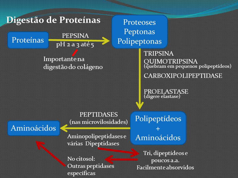 Digestão de Proteínas Proteínas PEPSINA pH 2 a 3 até 5 Importante na digestão do colágeno Proteoses Peptonas Polipeptonas TRIPSINA QUIMOTRIPSINA (queb