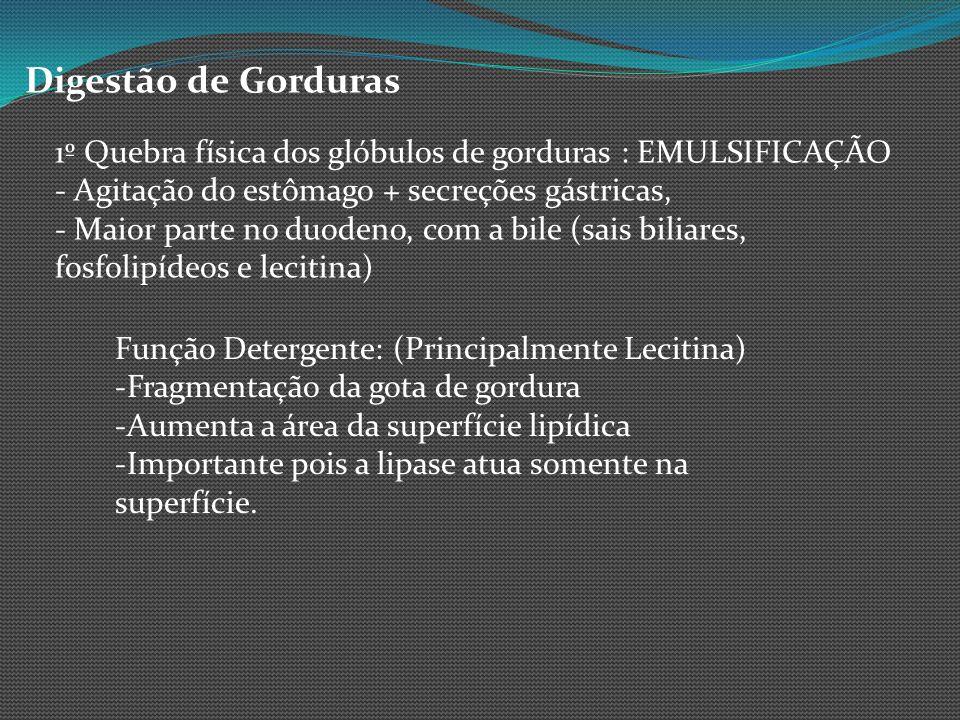 Digestão de Gorduras 1º Quebra física dos glóbulos de gorduras : EMULSIFICAÇÃO - Agitação do estômago + secreções gástricas, - Maior parte no duodeno,