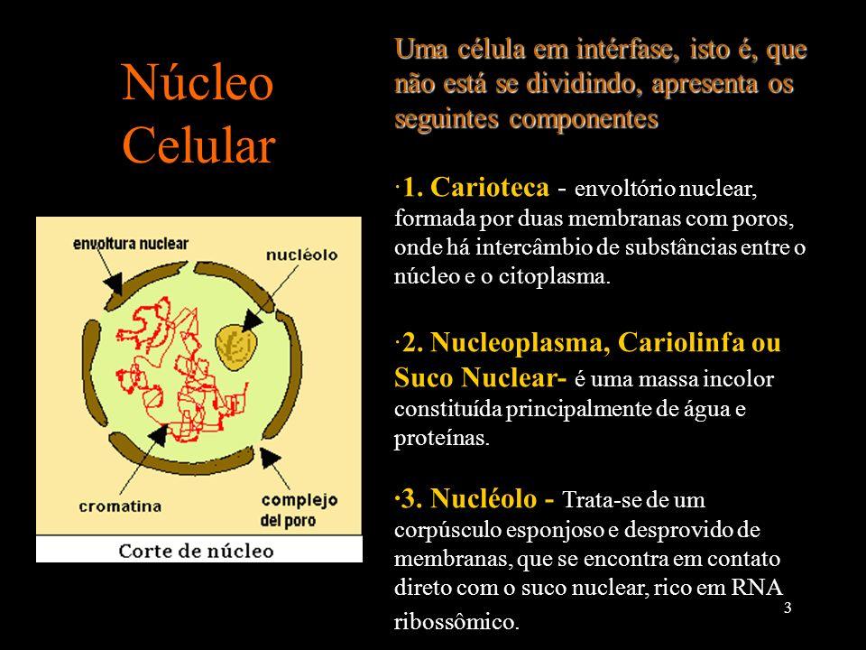 4 Núcleo Celular · Cromatina Representa o material genético, com proteínas e moléculas de DNA.