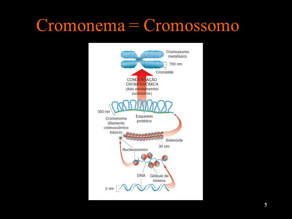 6 Cromossomo é uma única molécula de DNA O DNA é como uma escada retorcida ou uma dupla hélice e é composta por inúmero genes, os quais tem a função de determinar as características de cada um de nós.