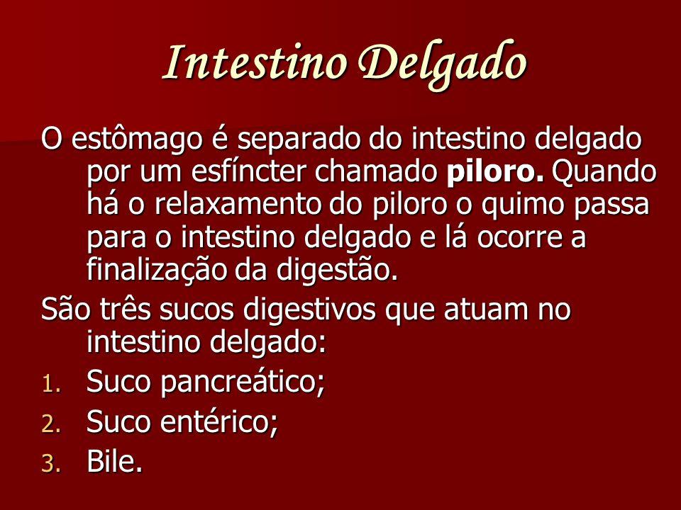 Intestino Delgado O estômago é separado do intestino delgado por um esfíncter chamado piloro. Quando há o relaxamento do piloro o quimo passa para o i