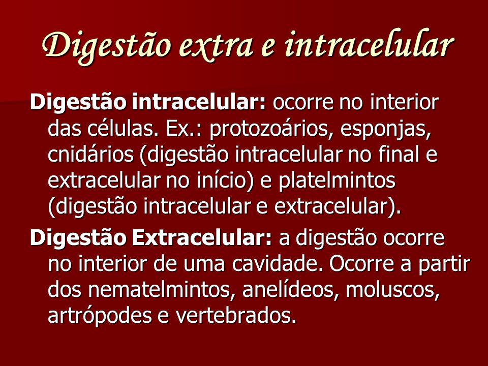Digestão extra e intracelular Digestão intracelular: ocorre no interior das células. Ex.: protozoários, esponjas, cnidários (digestão intracelular no