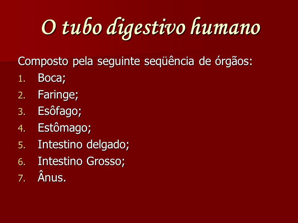O tubo digestivo humano Composto pela seguinte seqüência de órgãos: 1. Boca; 2. Faringe; 3. Esôfago; 4. Estômago; 5. Intestino delgado; 6. Intestino G