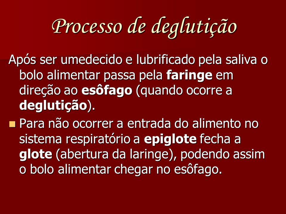 Processo de deglutição Após ser umedecido e lubrificado pela saliva o bolo alimentar passa pela faringe em direção ao esôfago (quando ocorre a degluti