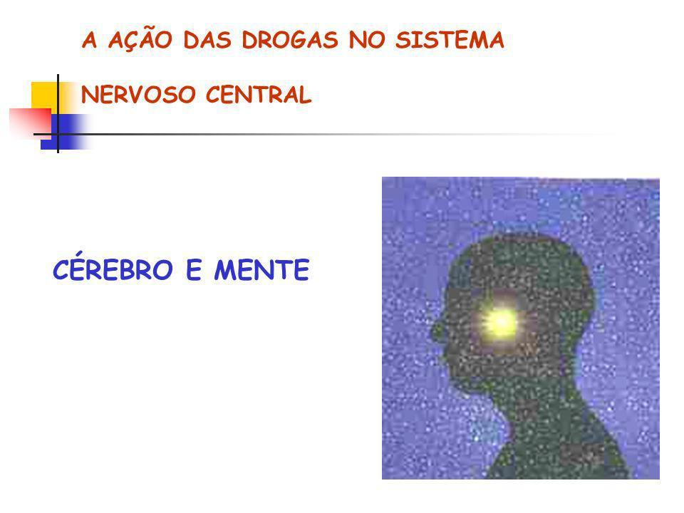 A AÇÃO DAS DROGAS NO SISTEMA NERVOSO CENTRAL CÉREBRO E MENTE