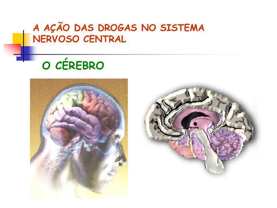 A AÇÃO DAS DROGAS NO SISTEMA NERVOSO CENTRAL O CÉREBRO