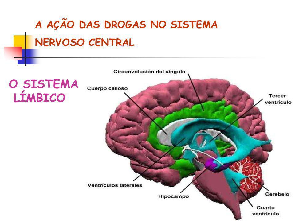 A AÇÃO DAS DROGAS NO SISTEMA NERVOSO CENTRAL O SISTEMA LÍMBICO