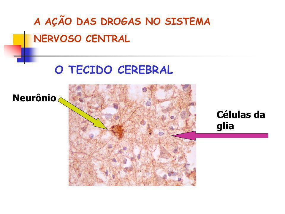 A AÇÃO DAS DROGAS NO SISTEMA NERVOSO CENTRAL O TECIDO CEREBRAL Neurônio Células da glia