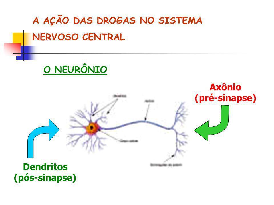 A AÇÃO DAS DROGAS NO SISTEMA NERVOSO CENTRAL O NEURÔNIO Axônio (pré-sinapse) Dendritos (pós-sinapse)