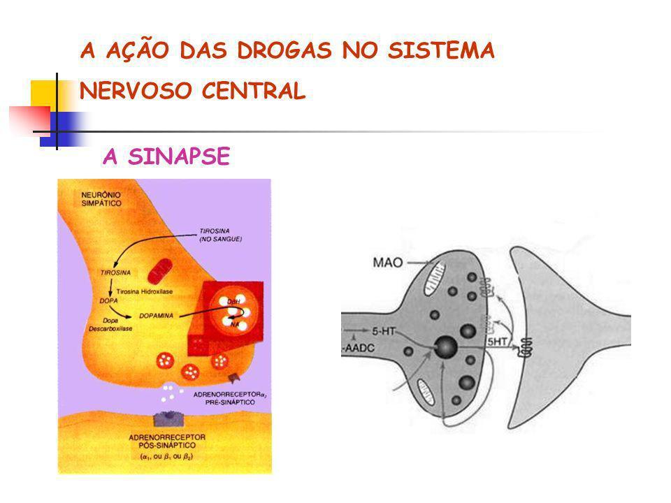 A AÇÃO DAS DROGAS NO SISTEMA NERVOSO CENTRAL A SINAPSE