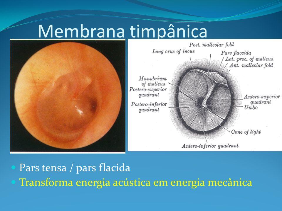 Membrana timpânica Pars tensa / pars flacida Transforma energia acústica em energia mecânica